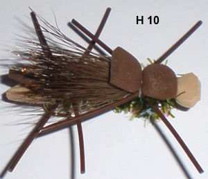 army ant (mouche diverse)