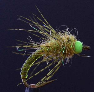 nymphe Candy chartreuse (nymphe bille)
